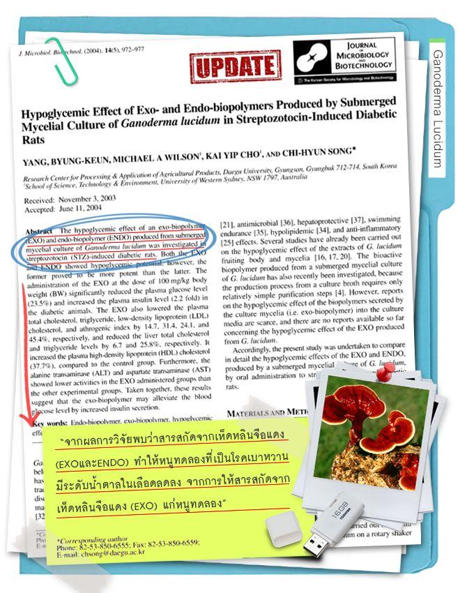 งานวิจัยเห็ดหลินจือรักษาเบาหวาน ลดระดับน้ำตาลในเลือด รักษาโรคเบาหวานได้จริง