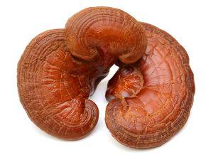 ตับอักเสบ ตับแข็ง มะเร็งตับ กินเห็ดหลินจือแดง บำรุงรักษา ได้ไหม