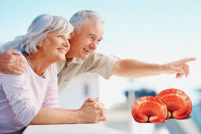 สมุนไพรเห็ดหลินจือแดง สปอร์ เคล็ดลับวิธีดูแลสุขภาพร่างกายแข็งแรงตัวเอง