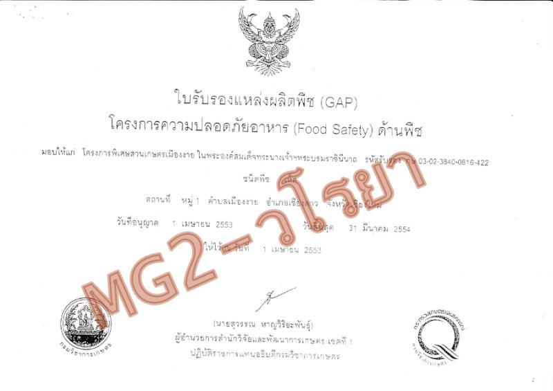 สปอร์เห็ดหลินจือ-MG2-กะเทาะเปลือก-วโรยา#4