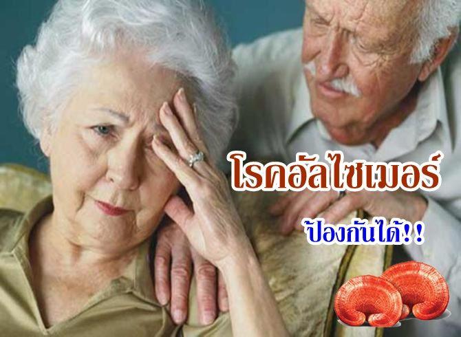 สปอร์เห็ดหลินจือ วิธีสมุนไพรบำรุงสมอง เพิ่มความจำ ป้องกันสมองเสื่อมโรคอัลไซเมอร์ ไม่ใช้อาหารเสริม