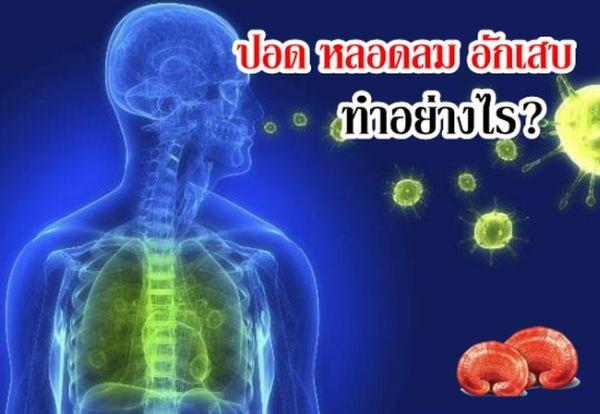 สปอร์สมุนไพรเห็ดหลินจือ-รักษาโรคปอด-หลอดลม-อักเสบ ทางเดินหายใจ ไม่มีผลข้างเคียง