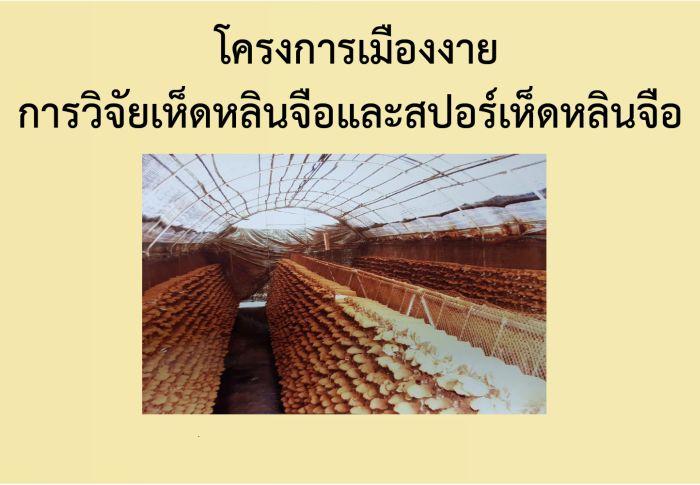 โครงการเกษตรเมืองงาย-สปอร์เห็ดหลินจือ-MG2-กะเทาะเปลือก-วโรยา-สรรพคุณที่ดีกว่าดอกรากเห็ดหลินจือแดงสกัด