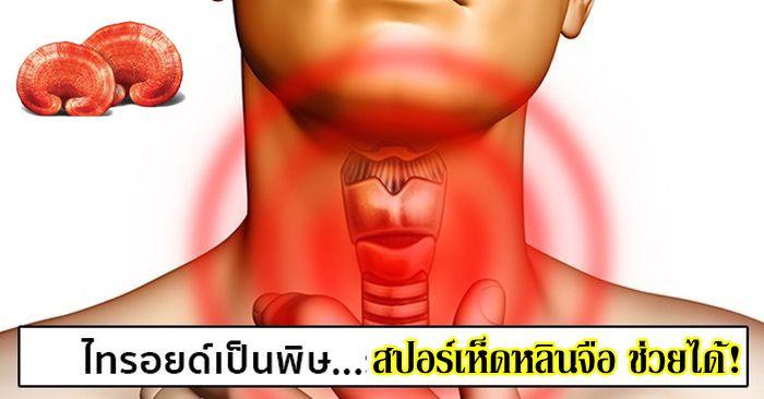 สปอร์เห็ดหลินจือแดงวิธีรักษาสมุนไพรไทรอยด์เป็นพิษ (ไฮเปอร์ไทรอยด์) อาการ สาเหตุ สรรพคุณทางยาคอพอก ไม่มีผลข้างเคียง