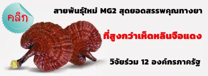 วโรยา สปอร์เห็ดหลินจือ MG2 เมืองงาย สมุนไพรสรรพคุณสุขภาพ