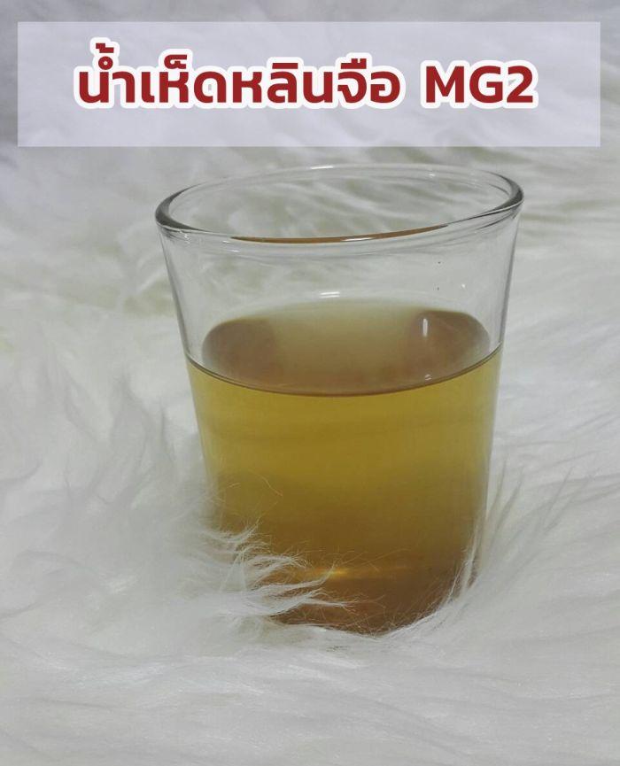 น้ำต้มเห็ดหลินจืออบแห้ง MG2 โครงการเกษตรเมืองงาย